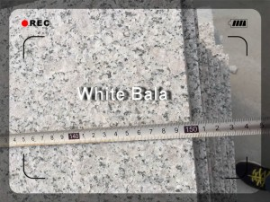 White bala (11)(04-22-12-24-18)